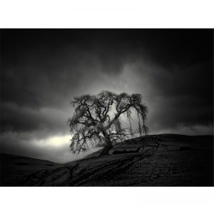 Tree and Hill VI - Nathan Wirth