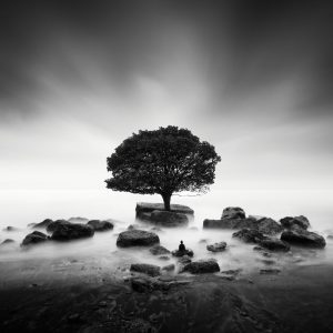 buddha & tree by Nathan Wirth a slice of silence - The Great Highway Gallery