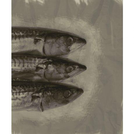 3 Fish Bugzester