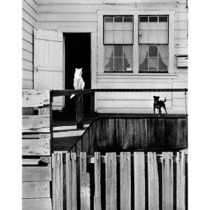 william-heick_Dog and Cat